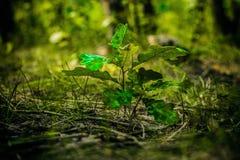 Nytt trädliv i skogen Royaltyfria Foton
