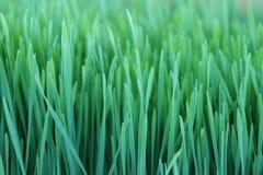 nytt växa för gräs Arkivfoton