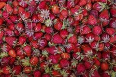 Nytt valda jordgubbar i en ask Royaltyfria Foton