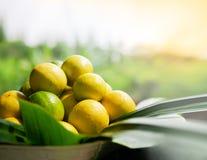 Nytt valde mogna citroner, många citroner i en korg royaltyfri fotografi
