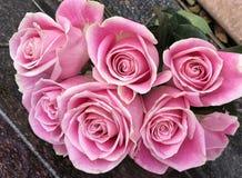 Nytt valde rosa rosa blomningar arkivfoto