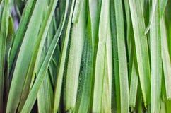 Nytt valt gräs royaltyfri bild