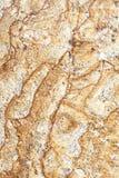 nytt venetian för guldgranit Arkivfoto