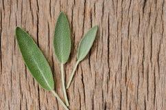 Nytt vist blad på lantlig träbakgrund Anti-Sage Benefits Arkivfoto