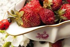 Nytt vitaminjordgubbe på en aptitretare Arkivbild