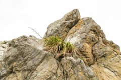 NZ λινάρι παραλιών Στοκ Εικόνα