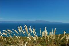 海岛nz斯图尔特 免版税图库摄影
