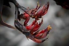 NZ-Eingeboren-Flachs Lizenzfreie Stockfotografie