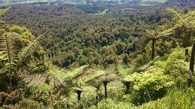 NZ Jungle Stock Image