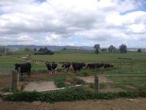 NZ-lantgård Arkivbilder