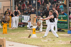 NZ woodcutting junior team at the Royal Adelaide Show, September 2014. Royalty Free Stock Images