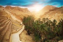 Oásis Chebika da montanha, deserto de Sahara, Tunísia, África Fotografia de Stock Royalty Free