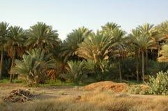 Oásis de Al Ain foto de stock