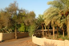 Oásis de Al Ain Fotos de Stock Royalty Free