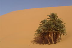 Oásis do deserto Imagens de Stock Royalty Free
