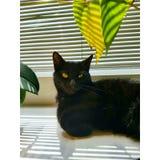Oásis do gato Fotos de Stock