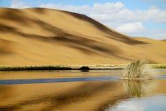 oásis e duna Imagem de Stock