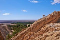 Oásis na parte montanhosa do deserto Foto de Stock