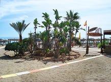 Oásis na praia Imagem de Stock