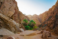 Oásis nas montanhas Fotografia de Stock