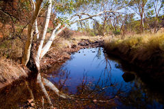 Oásis no deserto Fotografia de Stock Royalty Free
