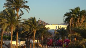 Oásis no deserto com Mountain View da palma e vídeos de arquivo