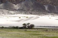 Oásis no deserto do frio do vale do nubra Fotografia de Stock Royalty Free