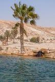Oásis no deserto Negev Imagens de Stock Royalty Free