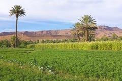 Oásis no vale do dade em Marrocos África Fotos de Stock