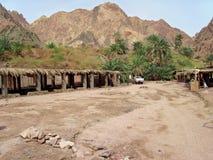 Oásis verdes em Sinai. Imagens de Stock