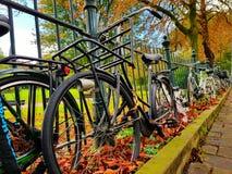 Oändlig cykel Fotografering för Bildbyråer