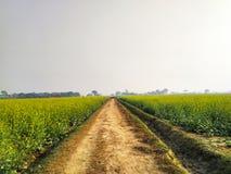 Oändlig väg som omges av gräsplan- och gulingväxter royaltyfria bilder