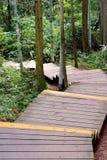 Oärlig bana i skog Arkivfoto