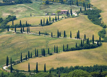 oärlig gata tuscany för bygdcypress Royaltyfria Foton