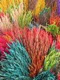 Oído colorido del arroz Imágenes de archivo libres de regalías