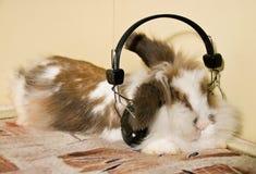 Oído de conejo Imagenes de archivo