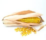 Oído de maíz Fotos de archivo libres de regalías