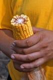 Oído de maíz Imagen de archivo libre de regalías