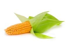 Oído de maíz aislado Imagenes de archivo