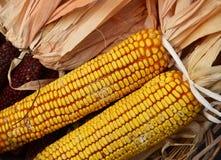 Oído de maíz seco Imágenes de archivo libres de regalías