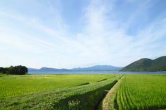 Oído del arroz y del lago Imagenes de archivo