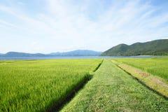 Oído del arroz y del lago Fotos de archivo