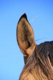 Oído del caballo Fotografía de archivo