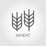 Oído del icono del esquema del trigo Concepto de la agricultura y de la cosecha Diseñe el elemento para el tema de la cerveza, di Fotos de archivo