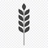 Oído del icono gráfico visual del trigo, de la cebada o de Rye, i ilustración del vector