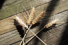 Oído del trigo Fotos de archivo libres de regalías