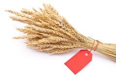 Oído del trigo con la etiqueta roja Fotos de archivo