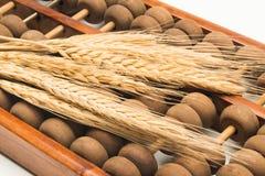 Oído del trigo en el ábaco imagenes de archivo