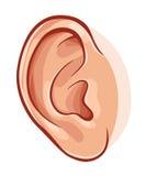 Oído humano Imágenes de archivo libres de regalías