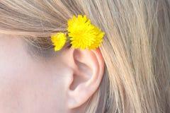 Oído humano femenino, con el pelo rubio y las flores amarillas foto de archivo libre de regalías